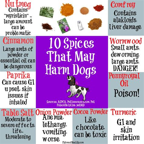 is cat food bad for dogs surprising foods that are dangerous for dogs