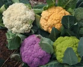 colored cauliflower cauliflower