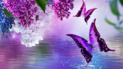 Butterfly Dreams butterfly dreams background graphics butterflywebgraphics