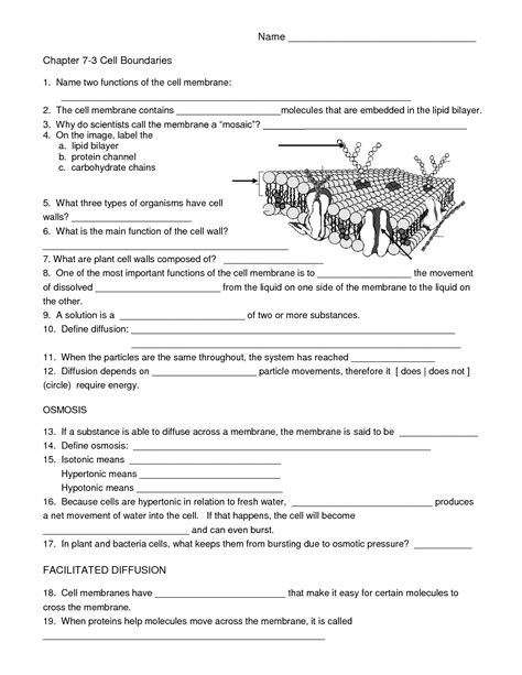 High School Biology Worksheets by 7 Best Images Of Free Printable Biology Worksheets High