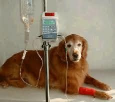 symptoms of renal failure in dogs kidney failure in dogs food for kidney disease