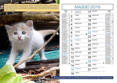centro commerciale il gabbiano orari calendario 2016 gatti dell oasi felina felini felici