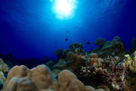 dive cook islands rarotonga dive cook islands dive centre reef to see