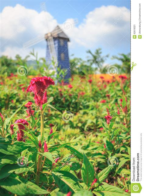 Garden Flower Windmills Flowers In The Garden On A Day And Windmill Stock Photo Image 62619321