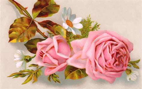 walppar madre rosa para el d 237 a de la madre wallpapers