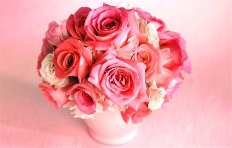 most beautiful pink roses hd wallpapers flowers pictures pink roses most beautiful wallpapers ultra hd 4k