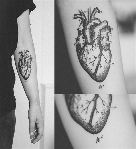anatomical heart tattoos anatomical human on arm