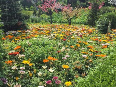 nice flower garden photo9 jpg picture of herb island pocheon tripadvisor