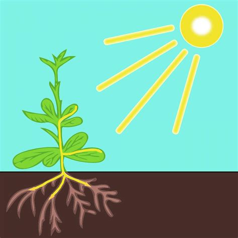 growing in the dark plants and light science project education com plant roots in the dark see light eurekalert science news