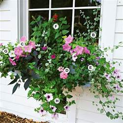 Flowers For Container Gardening New Home Interior Design Great Container Gardens