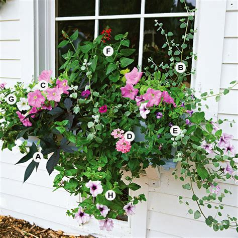 window box planting ideas new home interior design great container gardens