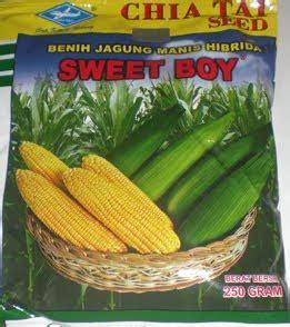 Harga Bibit Jagung Manis 1 Kg jagung manis hibrida sweet boy memetik