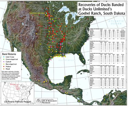 duck migration map waterfowl flyway map