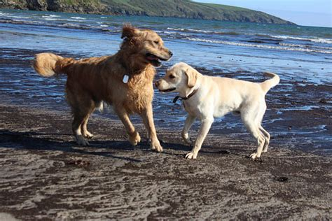 why golden retrievers are the best 12 reasons why a golden retriever makes the best family show page 3