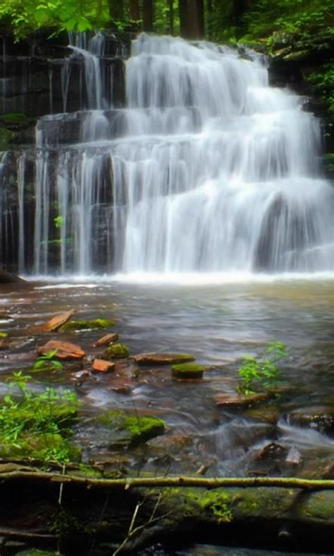 cascadas con 225 rboles imagui descargar imagenes fondo movimiento sonido cascadas
