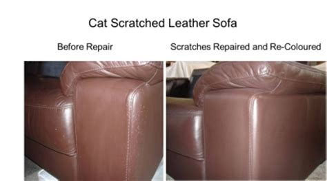 Cat Scratches On Leather Sofa Color Glo International Auckland 14a Atarangi Road