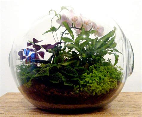 crooked nest s terrariums bring the serenity of a garden to any room inhabitat green design