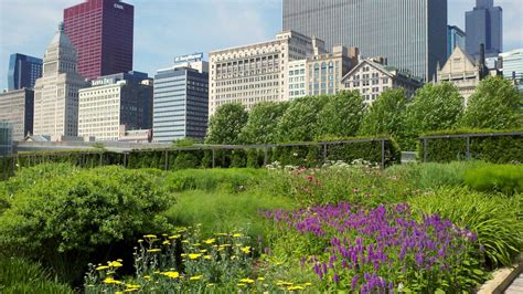 Chicago Gardens by Meet The Millennium Park Beekeeper Chicago Beek