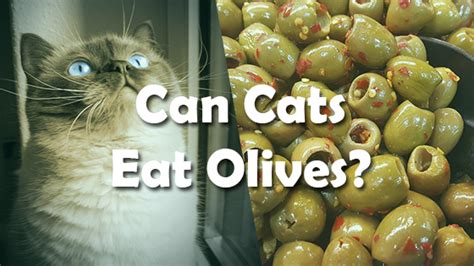 can dogs eat olives can cats olives pet consider