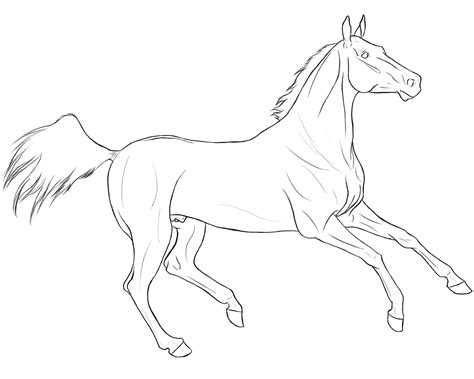 coloring book effect akhal teke lineart by dlnarielle on deviantart