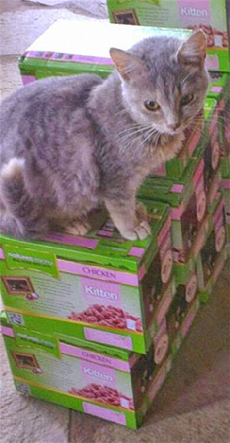 Royal Canin And Baby Cat 400gr Cat Food welcome to the skiathos cats food store