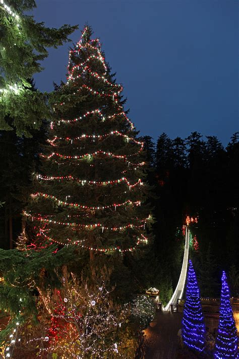 canyon lights to be home to world s tallest christmas tree