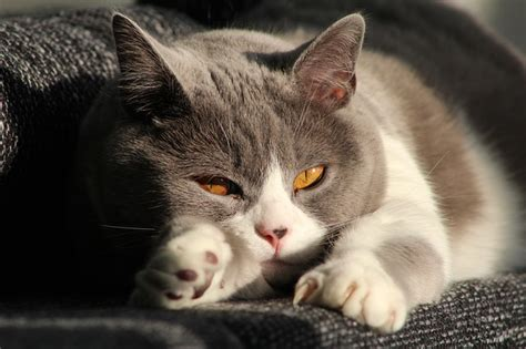 Katze Alleine Lassen Tipps Vorsorgen F 252 R Die Abwesenheit