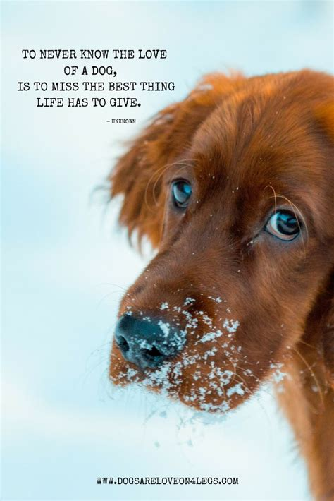 dog quotes ideas  pinterest puppy quotes