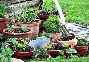 potting mix for vegetable container gardening container vegetable gardens growing in pots indoor or