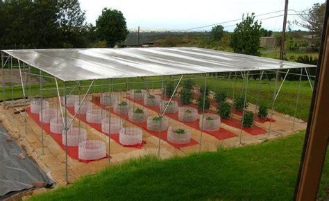build  sun rain shelter   growing tomatos  hawaii