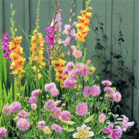 image gallery summer bulbs