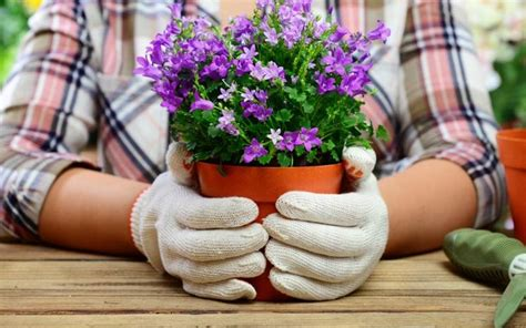 vasi plastica piante i vasi per piante vasi per piante modelli vasi