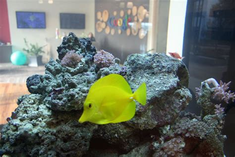 google images fish fish at google s kirkland seattle office