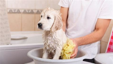 how much do puppy cost at petsmart grooming prices how much does it cost to groom a top tips