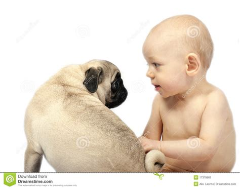 baby and pug baby and pug puppy stock image image 17378981