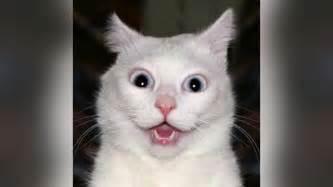 Funny Cat Vines 2014 | MakeMeLaughs.com Bestofcats