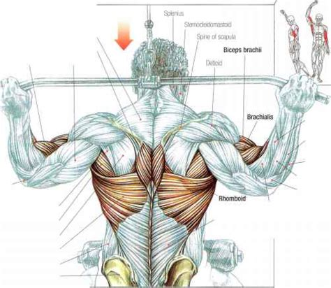 lat pulldowns abdominal muscles fitness vip