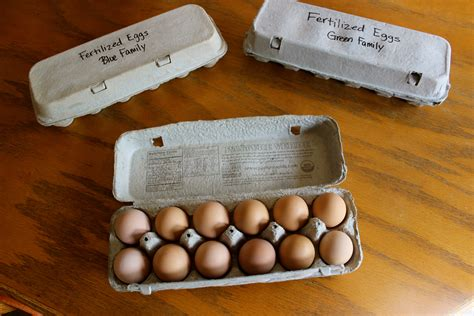 how can eggs sit out at room temperature the 5 stages to the 100 self sustaining flock abundant permaculture