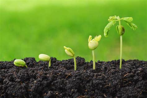 Wef 2018 Datum Dangote To Create Agriculture In Nigeria Datum