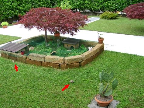 tartarughe in giardino come costruire un terrario per tartarughe di terra in