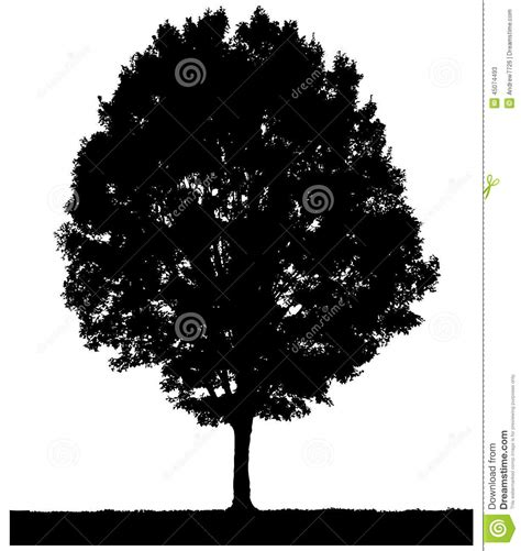 trees silhouettes stock illustration image of color 43384093 tree silhouette sketch stock illustration image 45074493