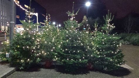 real christmas trees cwmbran real christmas trees