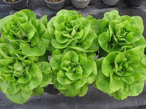 piante da orto in vaso orto sul balcone kit orto in terrazzo kit essenziale