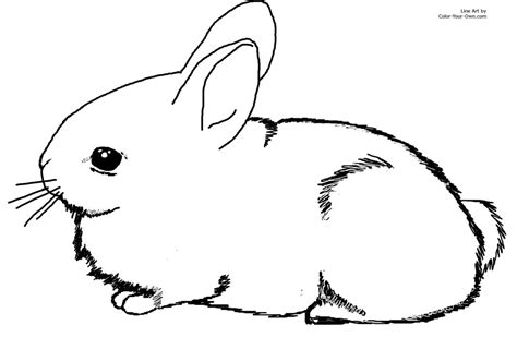 bunny coloring pages easy simple bunny color page free printable coloring sheets for