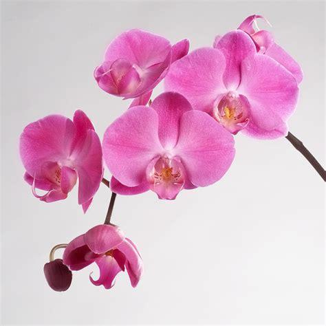 Wie Pflegt Orchideen Richtig 4793 wie sie ihre orchideen richtig pflegen planungswelten