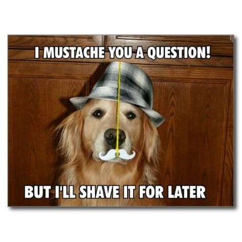 golden retriever humor golden retriever mustache you a question