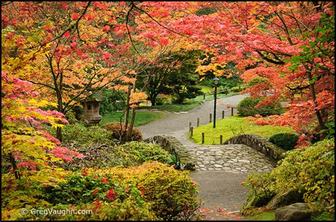 Botanical Garden Seattle Seattle Area Japanese Gardens In Autumn Wanders Wonders