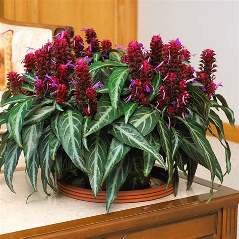pretty indoor plants what is the most beautiful looking house plant ask