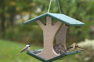 bird feeders correct placement for cardinals sussex