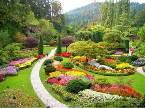 popular garden flower annual flower garden designs popular flowers in china
